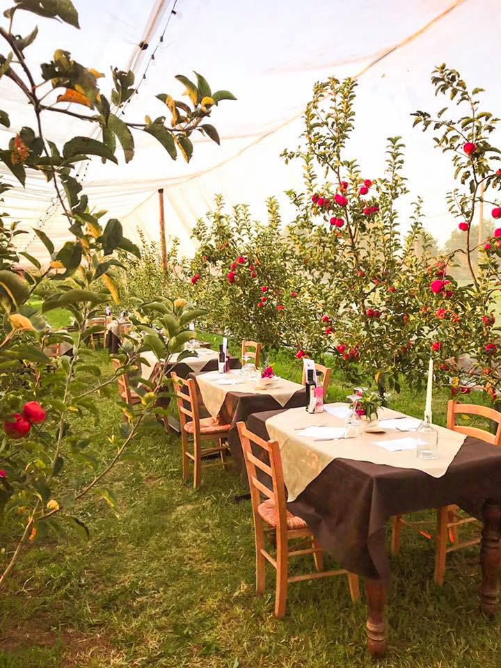 cena-nel-frutteto-crema-eventi-particolari-estate