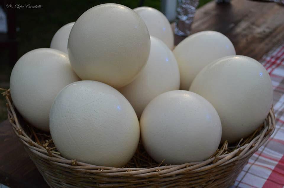 uova-di-struzzo-il-cascinetto